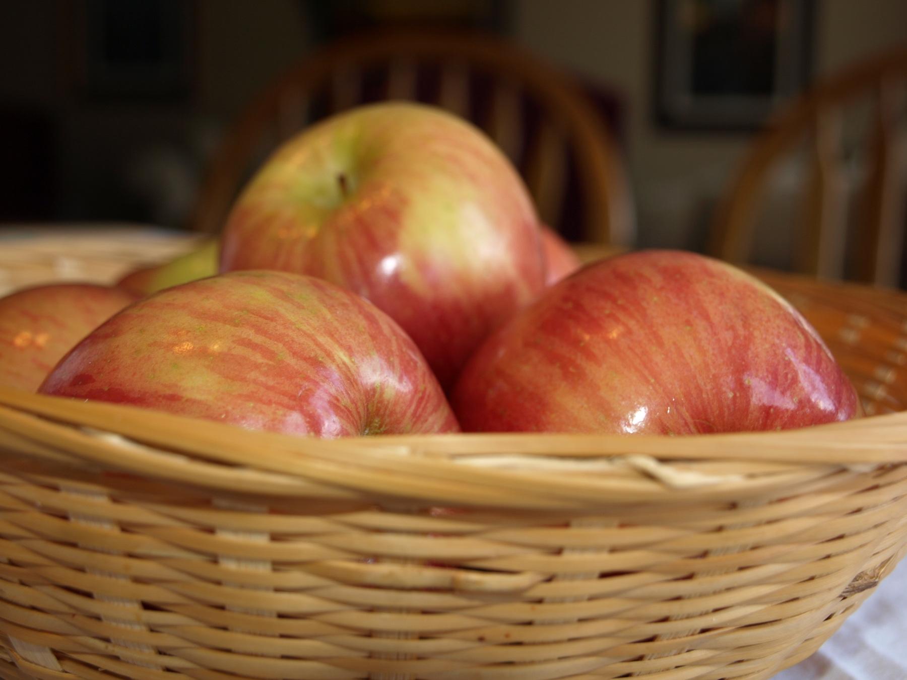 Fruit of the Spirit Curriculum
